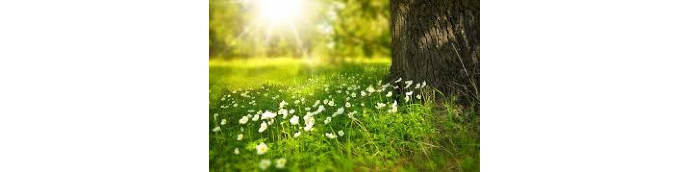 Весна-пора обновлений